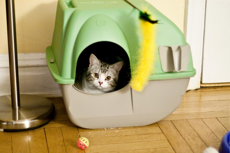 Litter box issues can be a physical problem, or perhaps a social one with your furry friend.