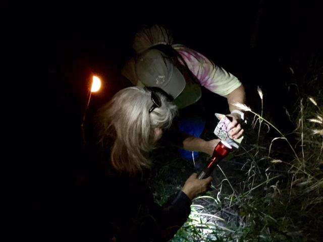 Armed with flashlights and cell phone cameras, about 80 people participated in a night walk in Fugage Woods.