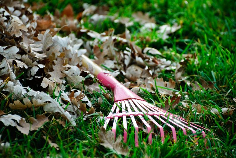 To rake or not to rake ... that is the question! Frankly, I think Hamlet would mulch.