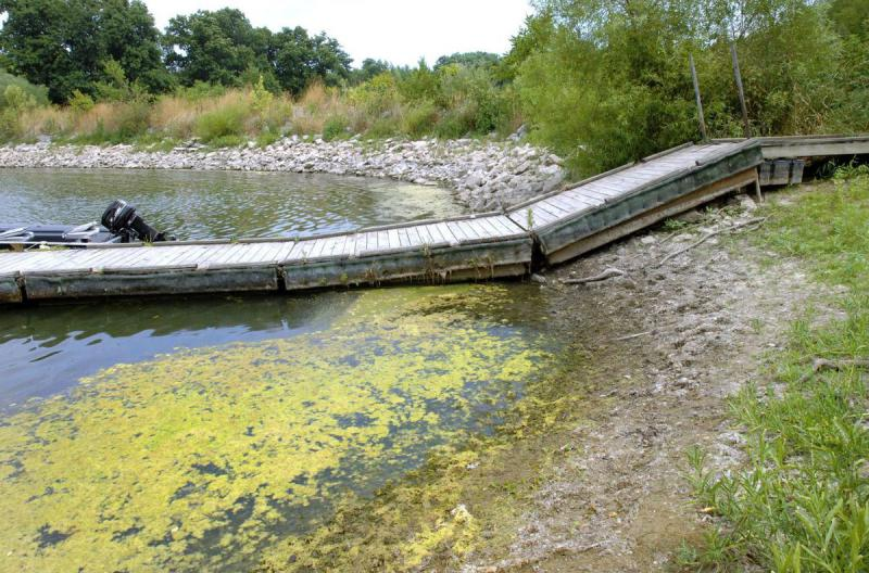 Algae blooms grow on the surface of Lake Evergreen. Algae, which can affect the taste and odor of drinking water, are a problem at both Lake Evergreen and Lake Bloomington, from which the city draws its drinking water.