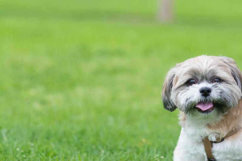 Pets can fill an empty space in the lives of seniors.