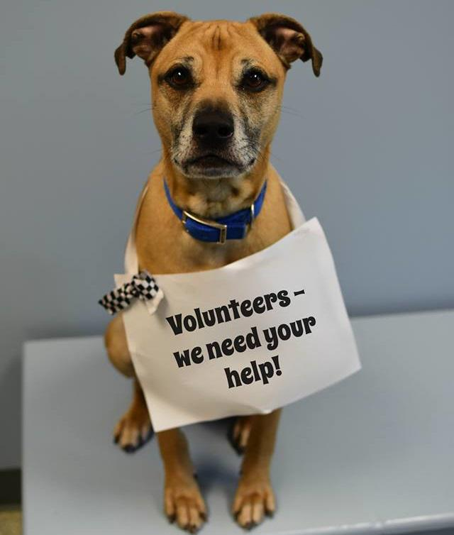 You can help the animals at the Humane Society by volunteering your time.