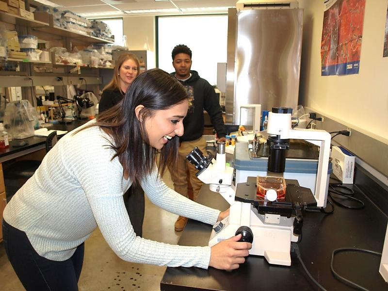 Undergraduate student Pravleen Bains, front, graduate student Marc Ashford, rear, and Immunology Professor Laura Vogel in the ISU laboratory where Vogel is studying how to rejuvenate B cells.
