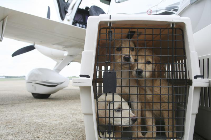 Dogs in carrier in front of plane