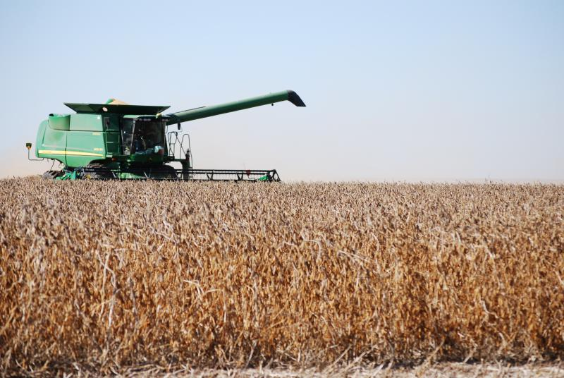 A combine harvesting a field of soybeans