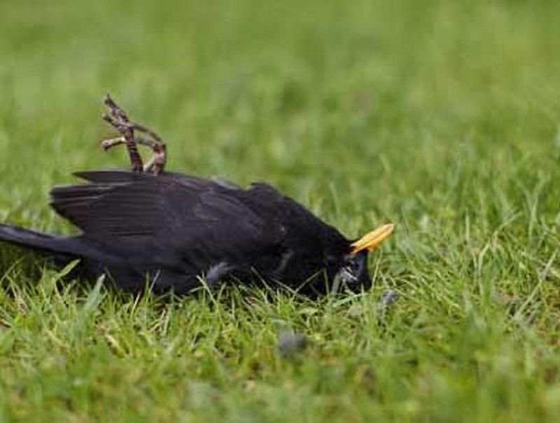 bird with West Nile virus