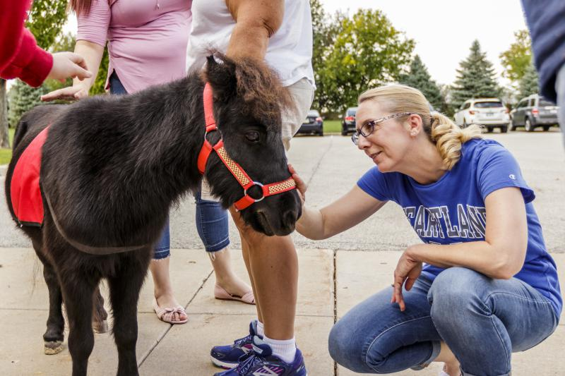 Heartland Community College students meet mini therapy horses during their campus visit Tuesday, Oct. 9, 2018.