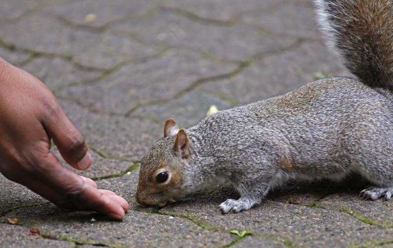 Hand feeds squirrel