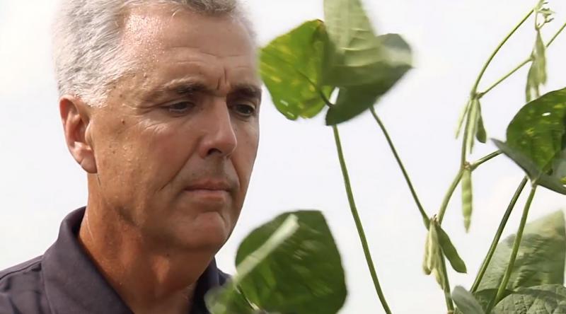 Doug looks at soybean leaf