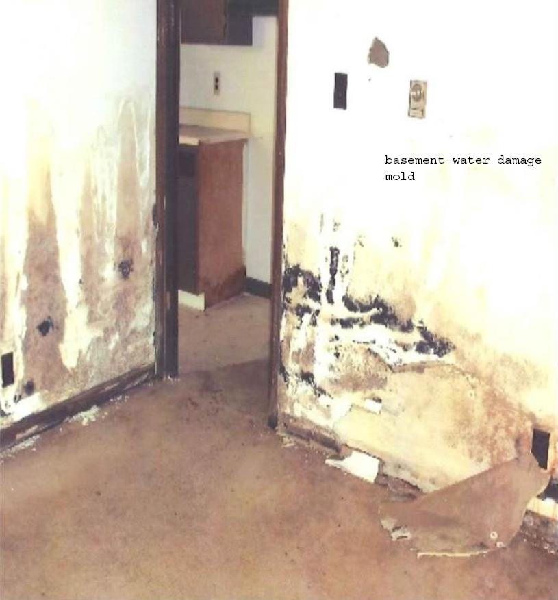 Mold In Apartment: Fixing Failing Apartment Property In Bloomington
