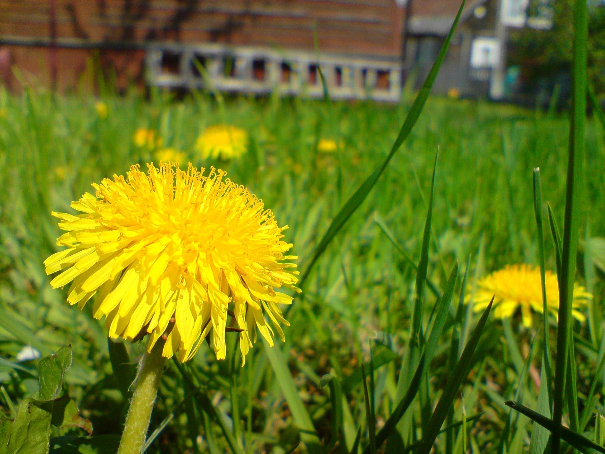 Glts Grow Three Ghastly Weeds Wglt