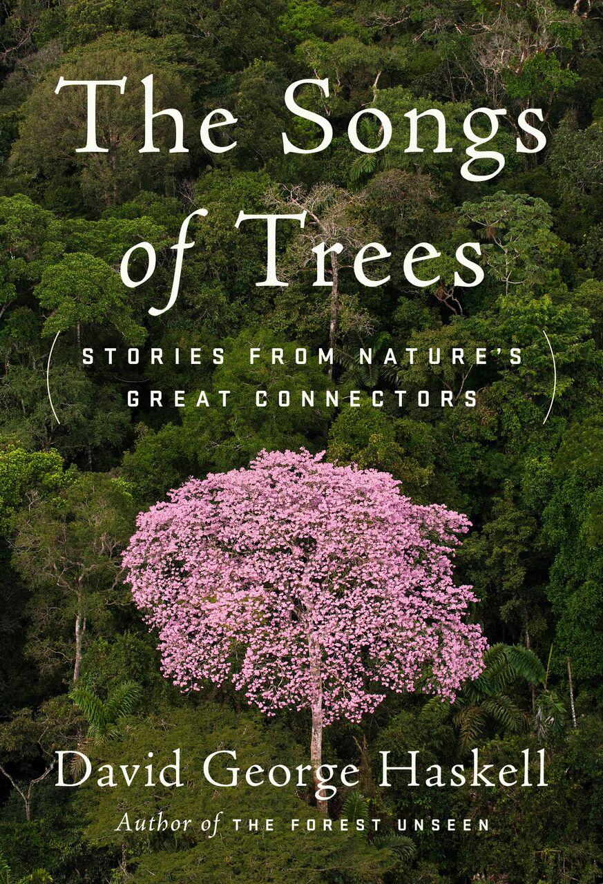 Biologist Studies The Voices And Songs Of Trees Wglt