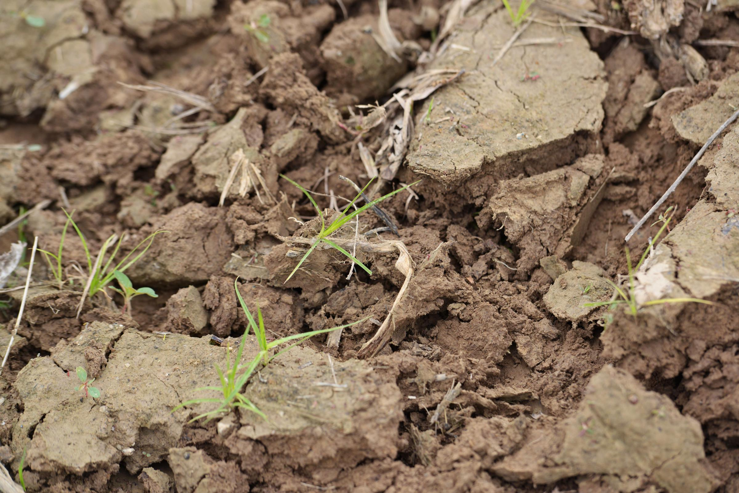 GLT\'s Grow: Soil Analysis Gets To The Bottom Of Your Dirt   WGLT