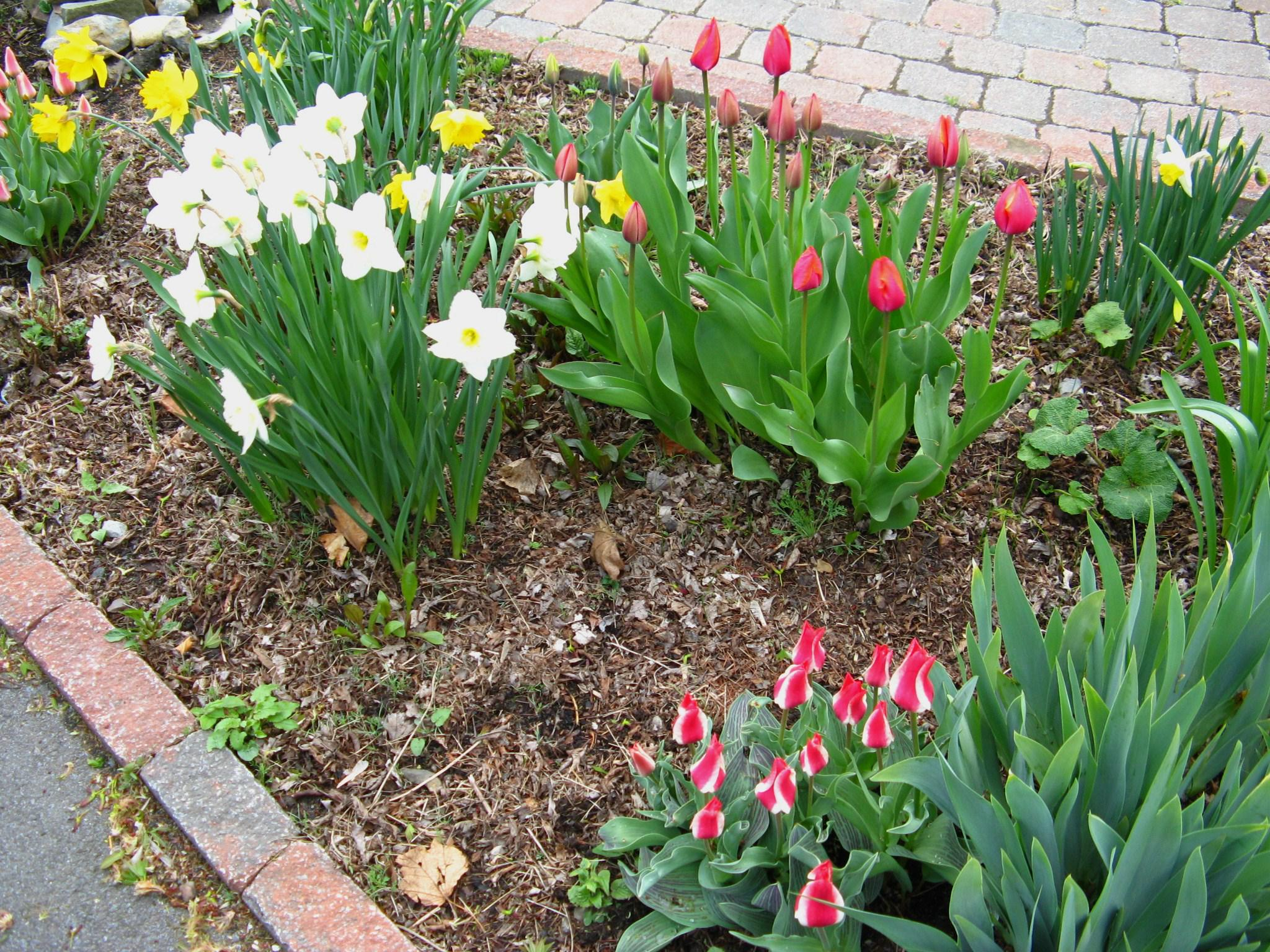 Glts grow spring to do list wglt amid this nice array of spring flowers theres a great opportunity to apply some mulch mightylinksfo