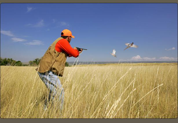 Picture of hunter shooting or aiming gun