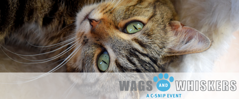 C-Snip Wags and Whiskers Event