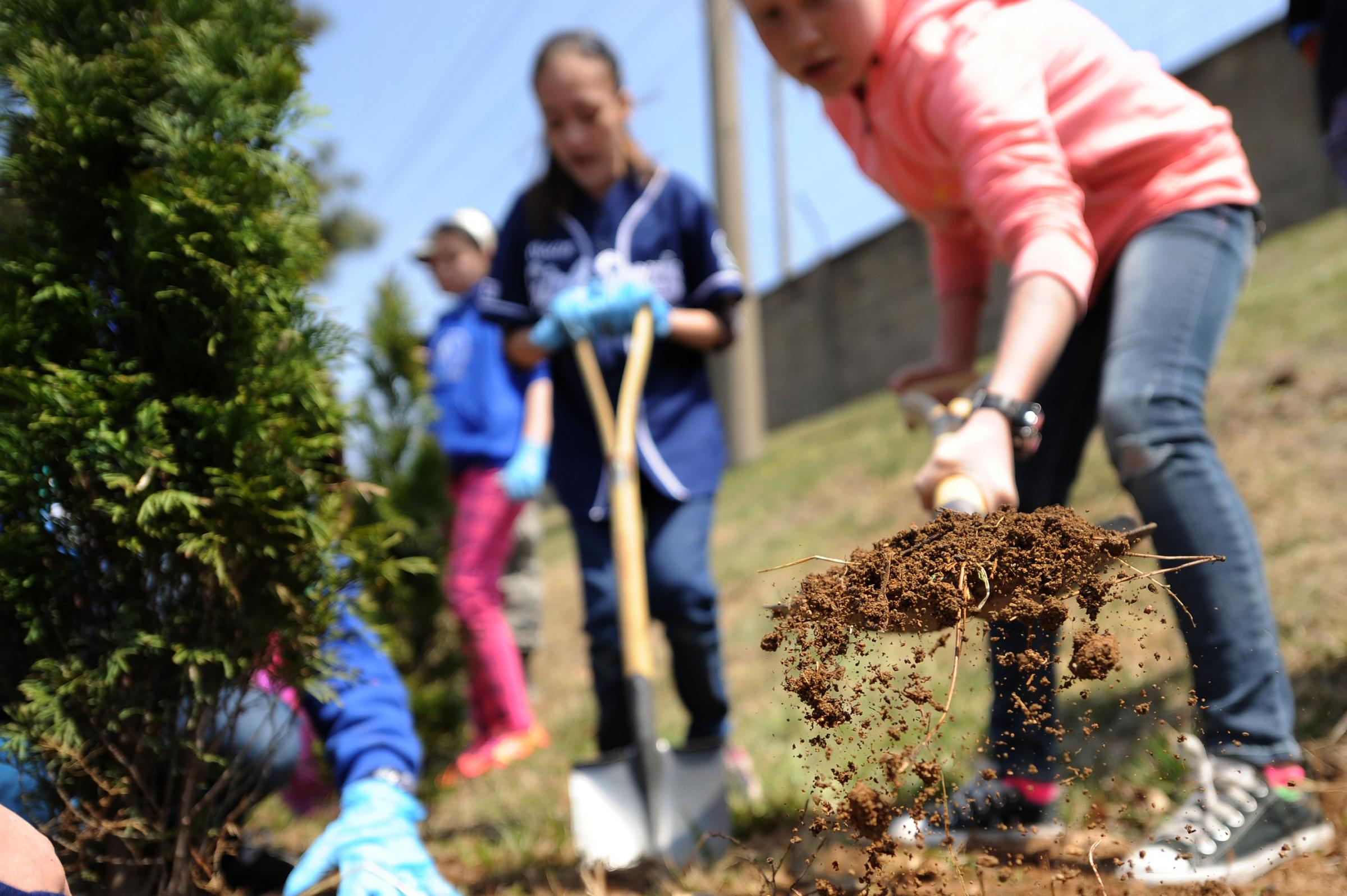 Grants available for Michigan tree-planting projects | wgvu