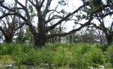 Empty lots along Biloxi's once historic waterfront.