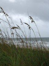 Storm winds ruffle Carolina Beach grasses hours before tropical storm Ernesto arrives.