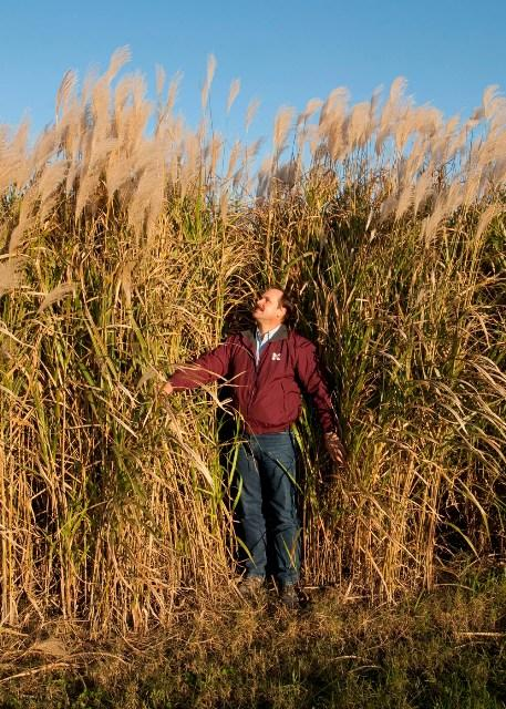 Dr. Brian Baldwin of Mississippi State University developed the variety of Giant Miscanthus which will be grown in North Carolina. The crop is used to produce biofuel.