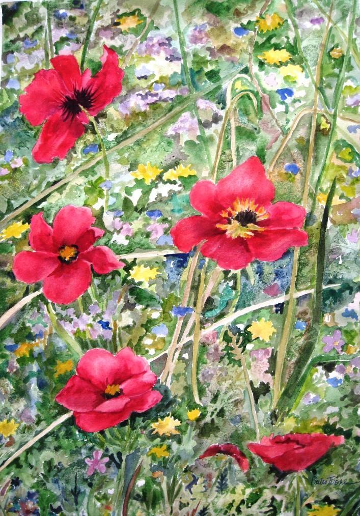 Spanish Poppies / Julia Bates Toone