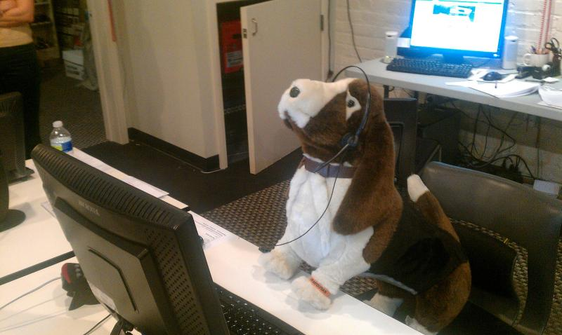 Weinstein the basset hound attempts to take a pledge call with his group, Carolina Basset Hound Rescue