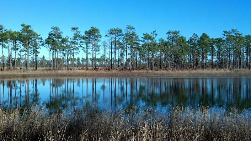Fence Cove Pond, Orton Plantation