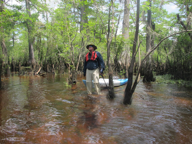 Julian Monroe Fisher explores the Three Sisters Swamp in North Carolina