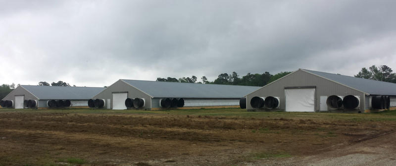 A concentrated animal feeding operation (CAFO) in Pender County.