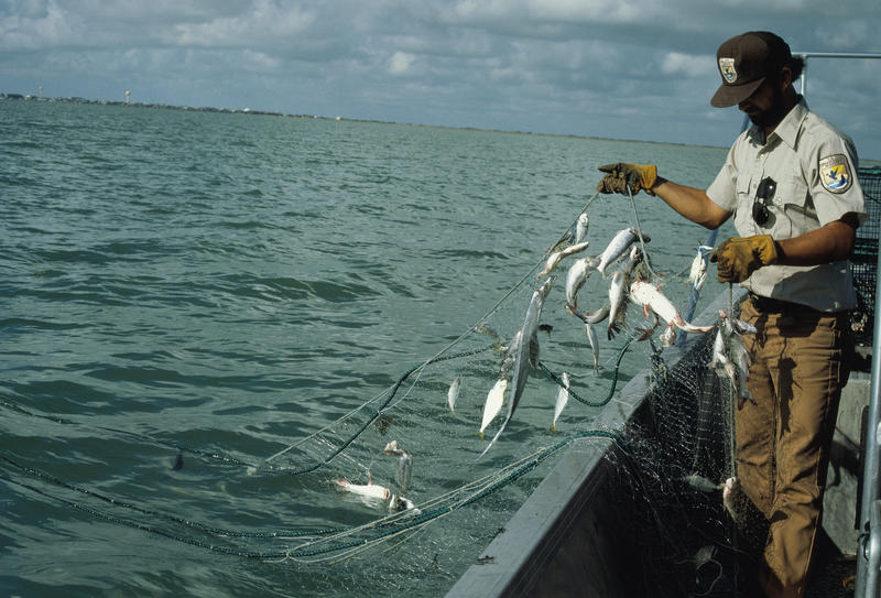 Fish and Wildlife Service worker on boat checking gill net full of fish