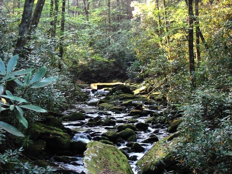 Joyce Kilmer National Forest, Graham County