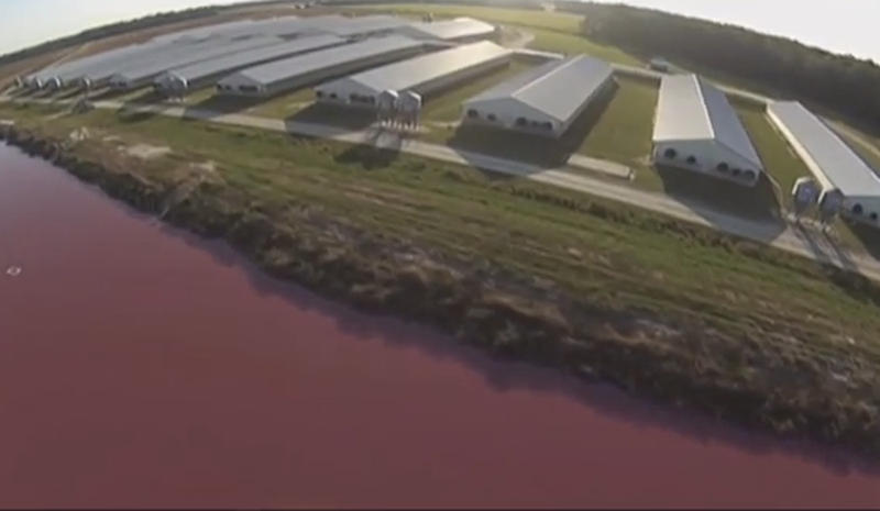 A waste pond in front of a hog farm in North Carolina.