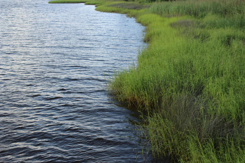 Water sampling at 12 locations along the Cape Fear River begins Monday, June 19.