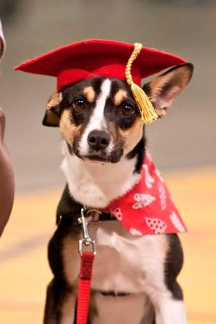 Presto, this year's Spring Valedictorian from the Pawsitive Partners Prison Program