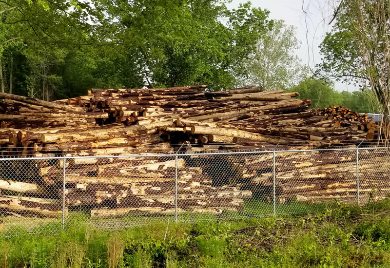 Logs stacked at the Malec Brothers property.