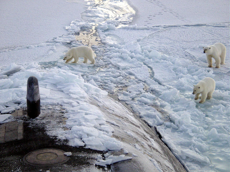 Three Polar bears approach the starboard bow of the Los Angeles-class fast attack submarine USS Honolulu (SSN 718) while surfaced 280 miles from the North Pole sometime before October 2003.
