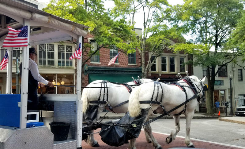 Horse-drawn carriages have new rules, after the city council passed new regulations.