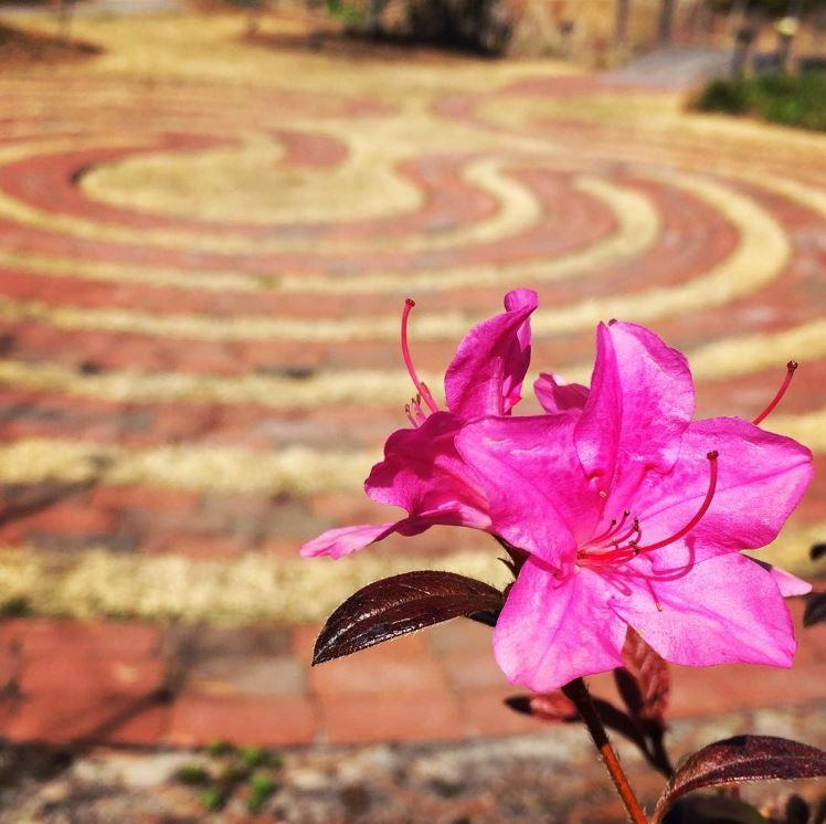 Labyrinth and flower at Lower Cape Fear Hospice & Life Care Center