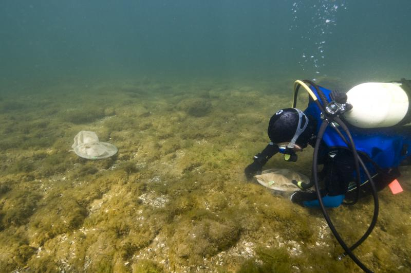 Ellen Marsden examines an egg trap on what is left of the historic spawning reef in Thunder Bay. This reef was buried in cement kiln dust which filled in the spaces between the stones where fish would otherwise deposit their eggs.