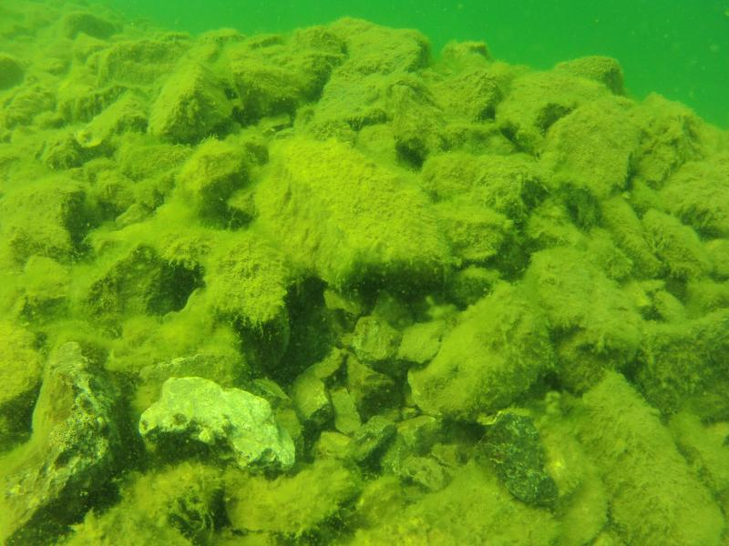 This is a reef that researchers built in Thunder Bay. Lake trout are spawning there, although it took a few years.