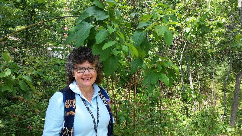 Coggin Heeringa is instructor of Environmental Studies at Interlochen Arts Camp. She's pictured next to a sassafras tree.