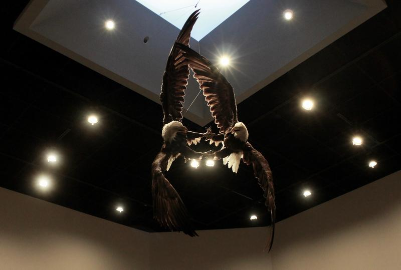 The Eyaawing Museum was designed around this central exhibit. A pair of mated eagles were doing a bonding ritual where they lock talons and freefall together. Their wing tips hit two powerlines and the pair were electrocuted to death.