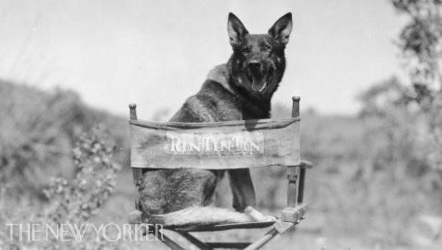Kids Commute Ep. 59 - Doggie Week! FINDING RIN TIN TIN, by Stephen Edwards. Interlochen Public Radio - classical music for kids!