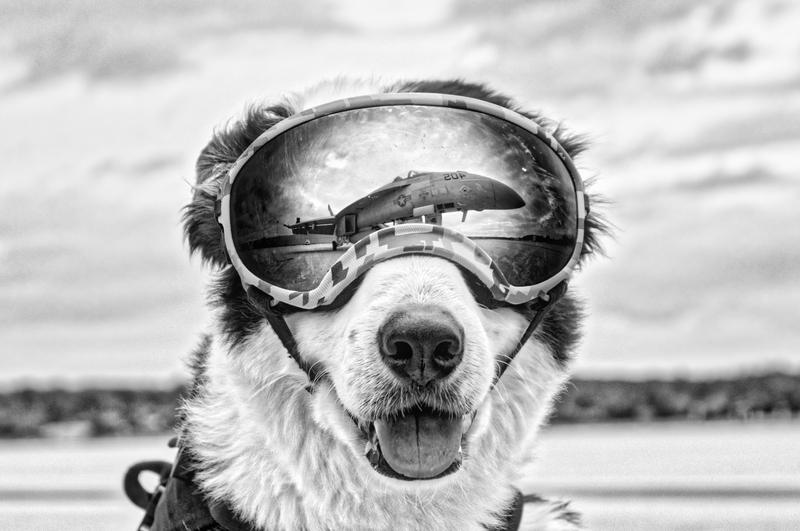 A memorial service will be held Saturday for Piper, the dog who worked at the Cherry Capital Airport.