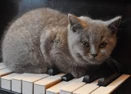 Cats have been walking on keyboards for centuries! Today, we'll hear music inspired by a little kitty named Pulcinella. Interlochen Public Radio - classical music for kids!