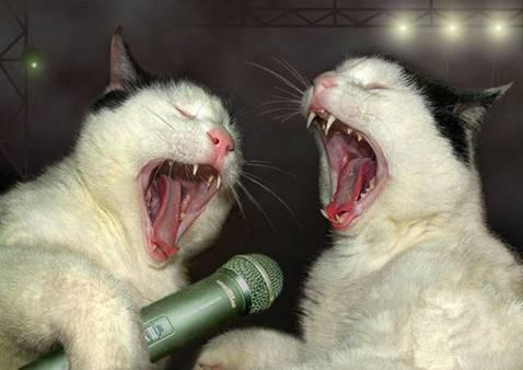 Today on Kids Commute: dueling operatic cats! Interlochen Public Radio - classical music for kids!