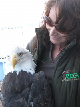 Wildlife rehabilitator Marge Gibson with a bald eagle at her Raptor Education Group Center near Antigo.