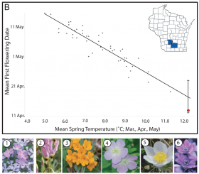 Graph of flowering times