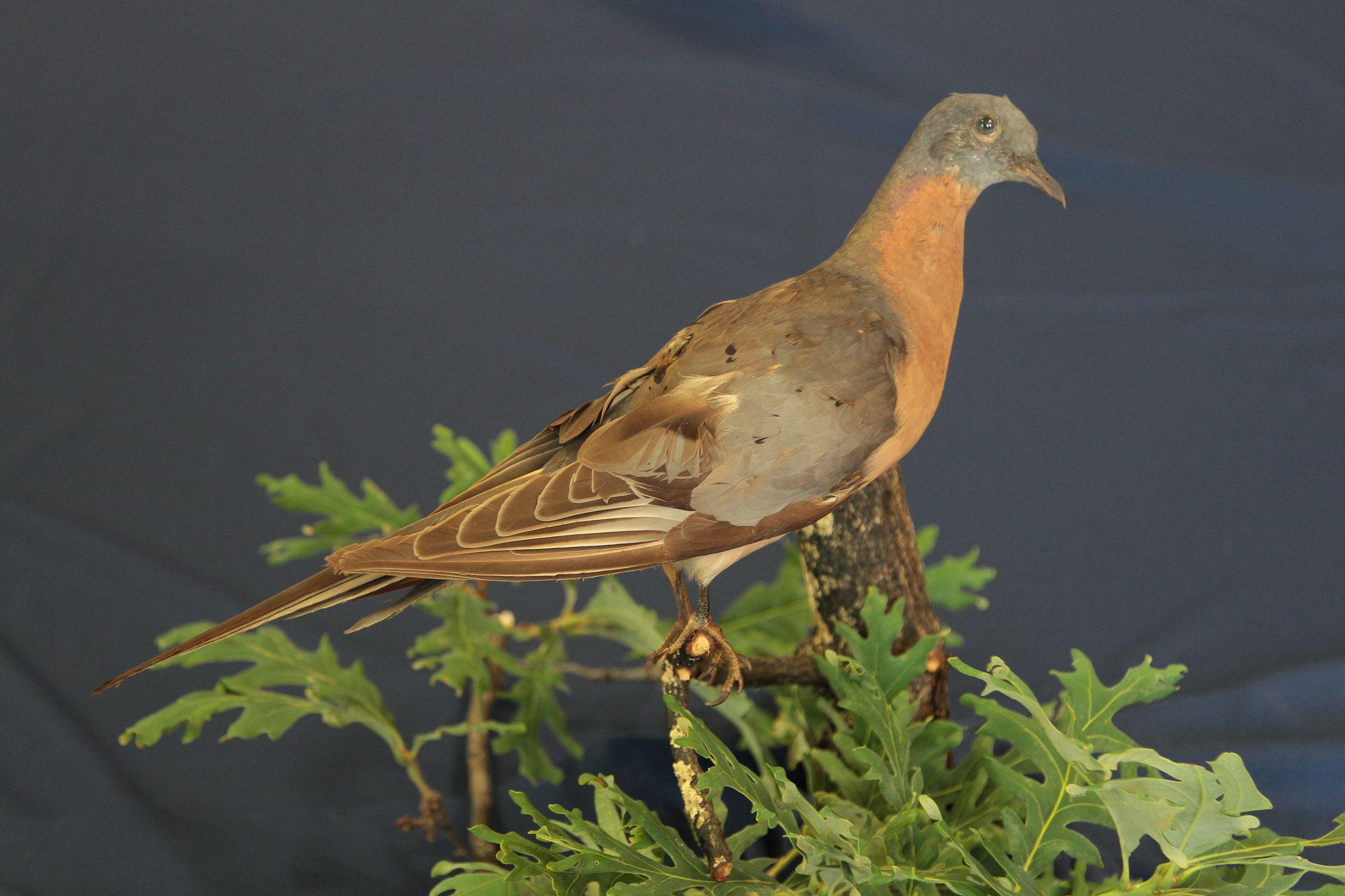 View of an Extinct Species | Tri States Public Radio: tspr.org/post/view-extinct-species
