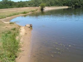 Shoreline of Spring Lake which has levels of atrazine that exceed its TMDL - total maximum daily limit.